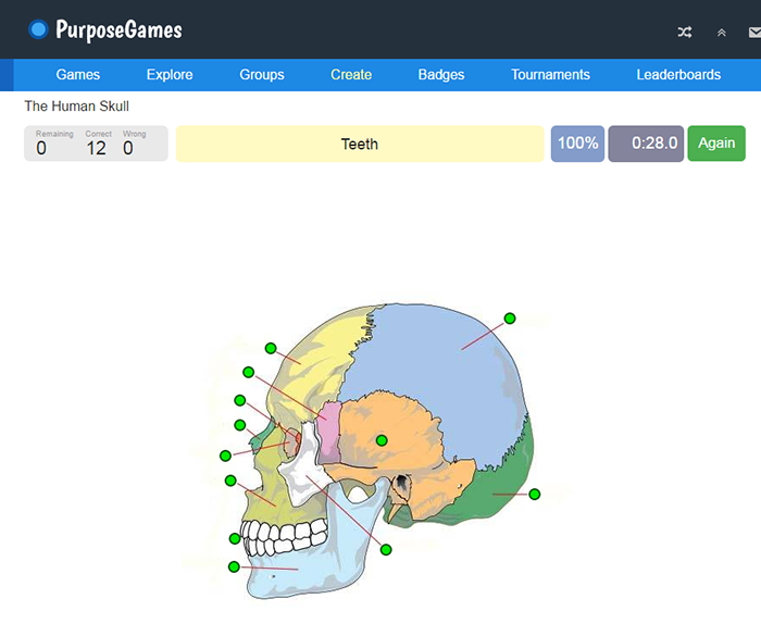 Screenshot from the website showing the anatomy of a skull